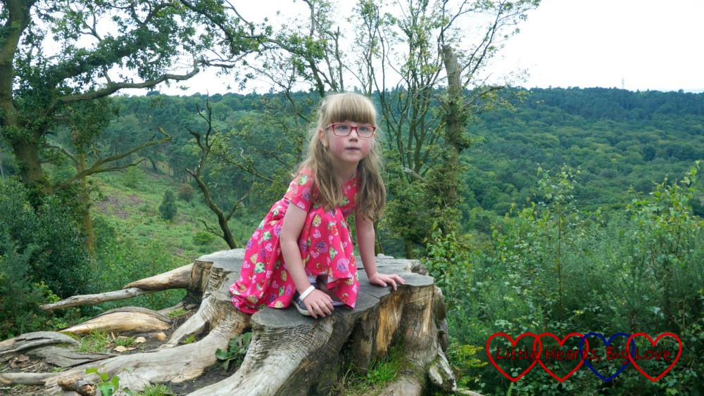 Jessica sitting on top of a tree stump