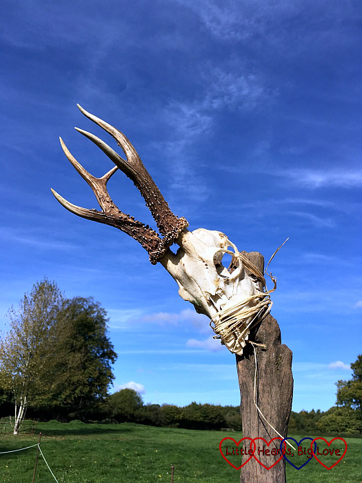 A roe deer skull tied to a post with a beautiful blue sky behind it