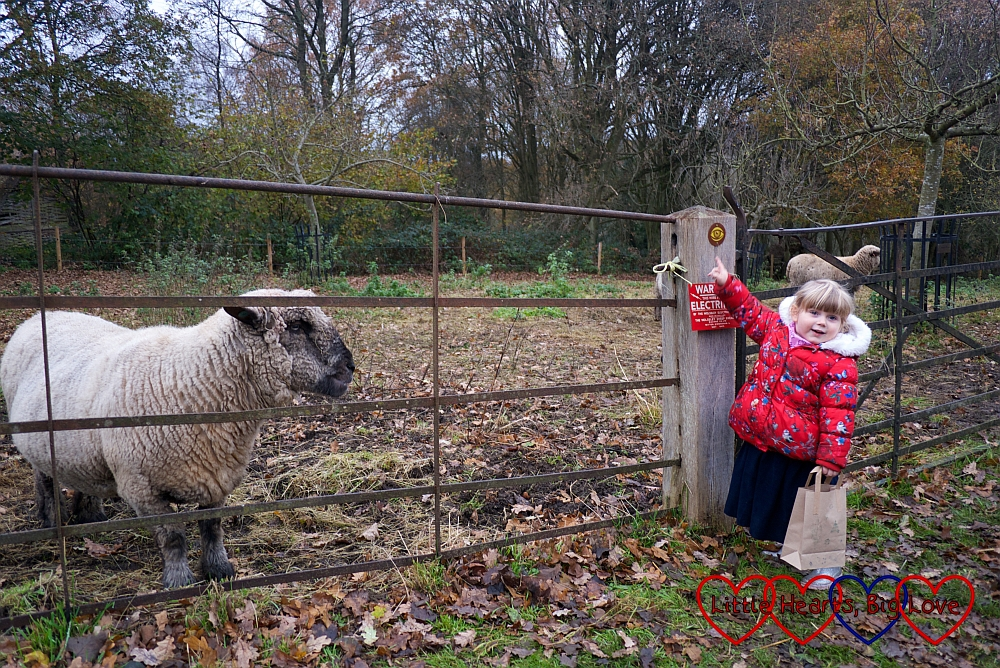 "Sophie spotting the ""listen"" sign next to the sheep pen"