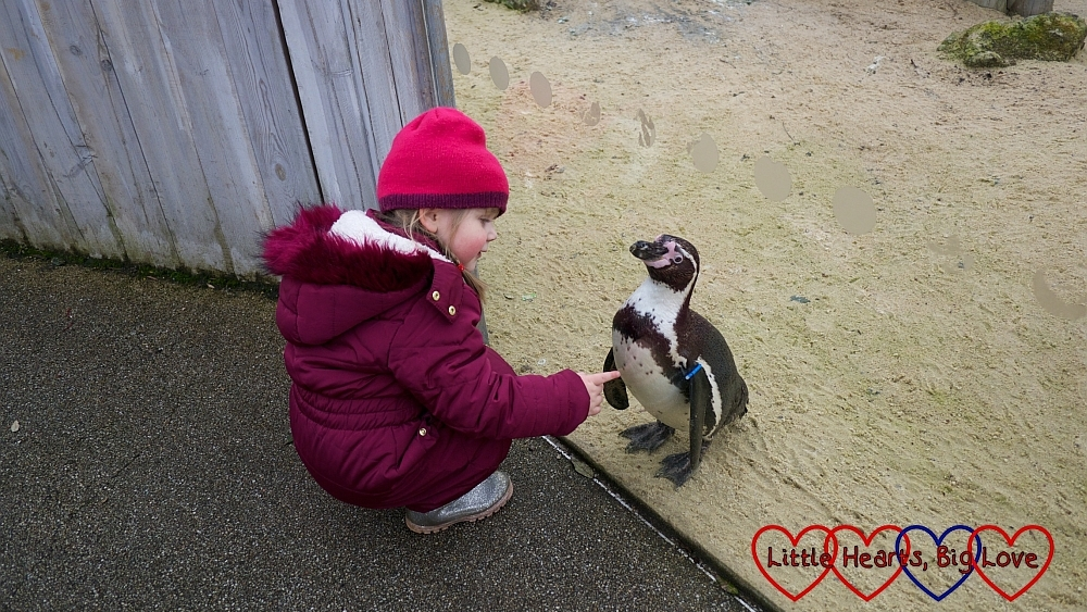 Sophie getting close to one of the penguins at Chessington