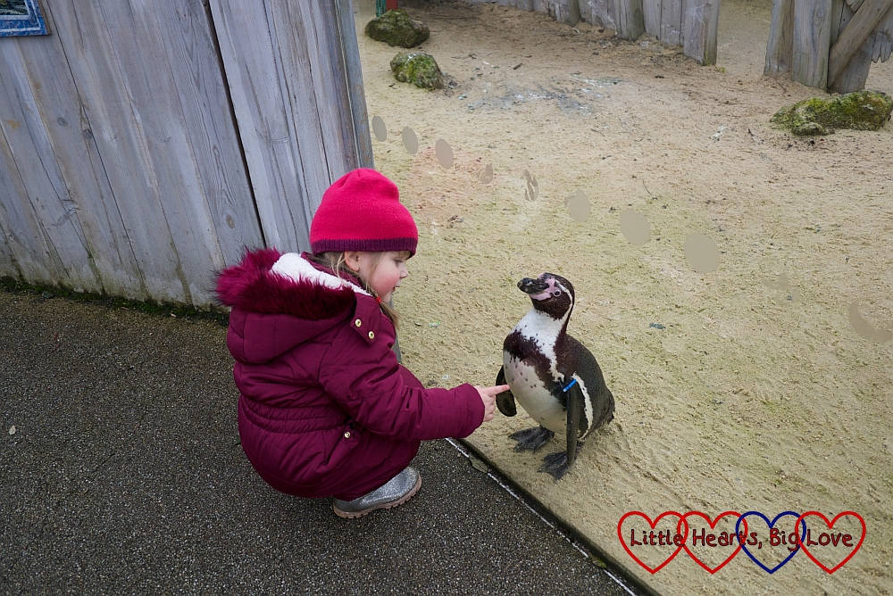 Sophie getting close to one of the penguins