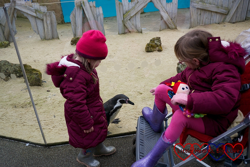 Jessica and Sophie getting close to one of the penguins