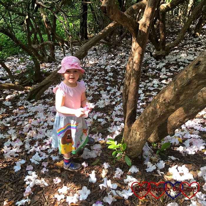 Sophie gathering fallen rhododendron blooms at Black Park