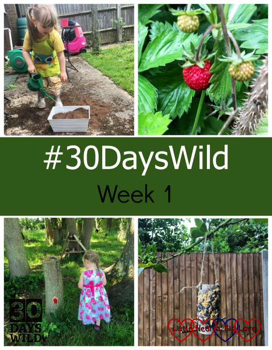 """Sophie planting flowers; wild strawberries in the garden; Sophie finding fairy houses and a bird feeder made from a toilet roll tube - """"#30DaysWild - Week 1"""""""