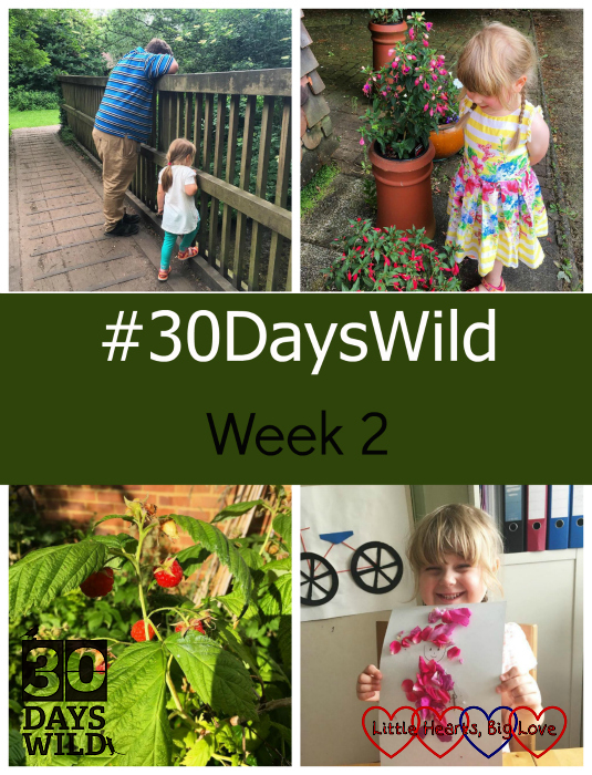 "Sophie and Daddy playing Pooh sticks; Sophie looking at the flowers in Grandma's garden; raspberries growing in the garden; Sophie with her flower picture - ""#30DaysWild - Week 2"""