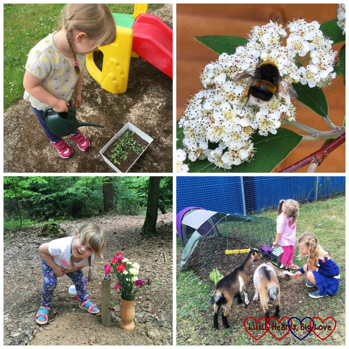 Sophie watering the wild flower seedlings; a bumble bee on the pyracantha; Sophie standing next to Jessica's forever bed; Sophie playing with goats at a school farm