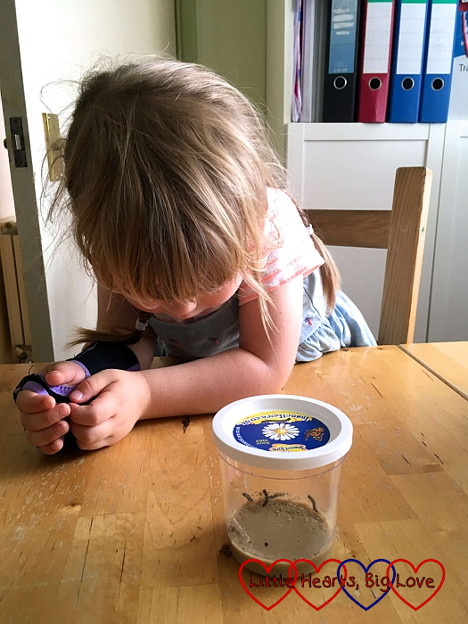 Sophie looking at the teeny tiny caterpillars when they first arrived