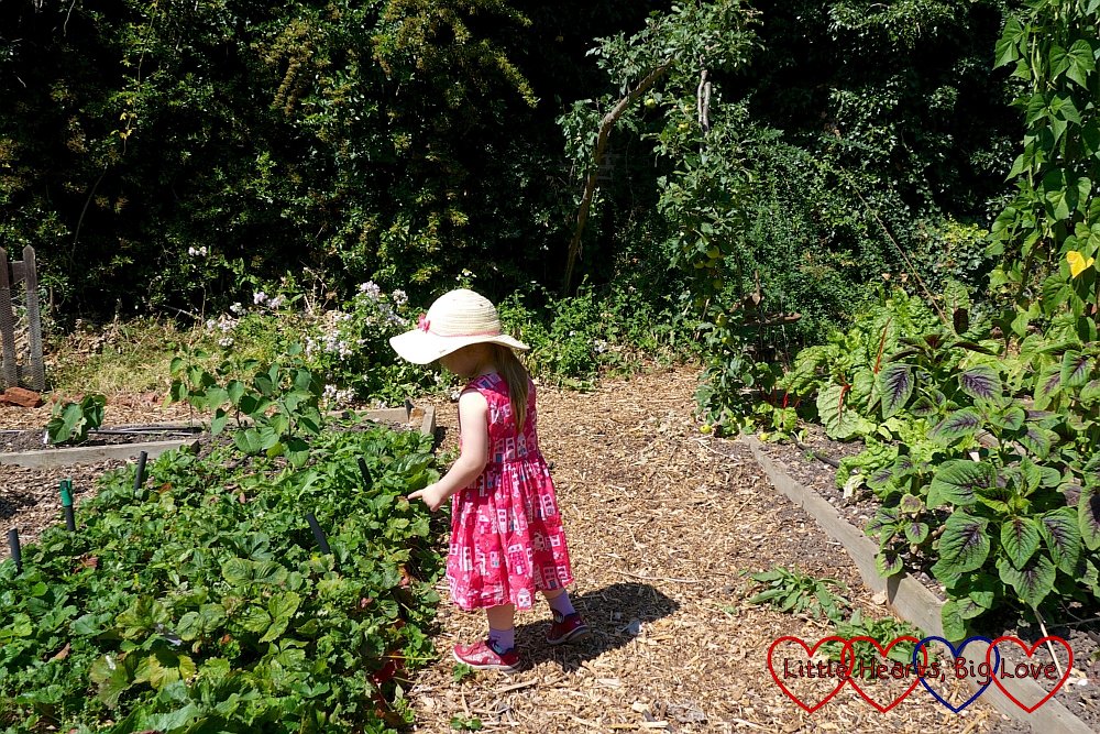 Sophie exploring the vegetable garden at Iver Environment Centre