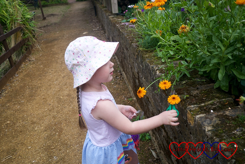 Sophie choosing her flowers for her flower fairy picture