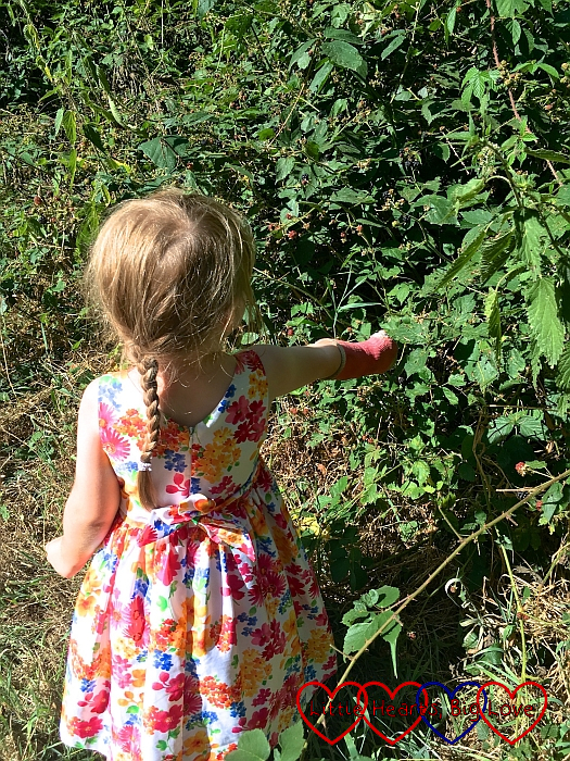 Sophie picking blackberries