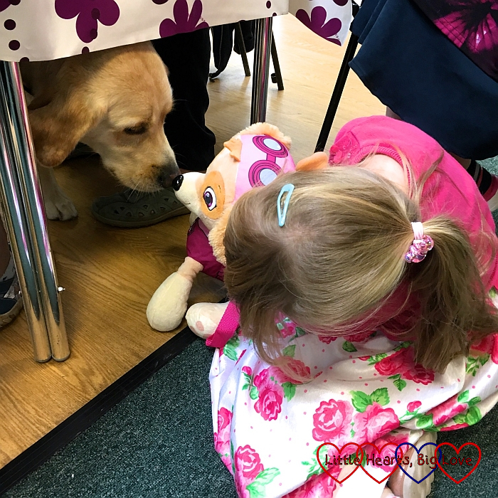 Sophie showing her Skye toy to a guide dog at church