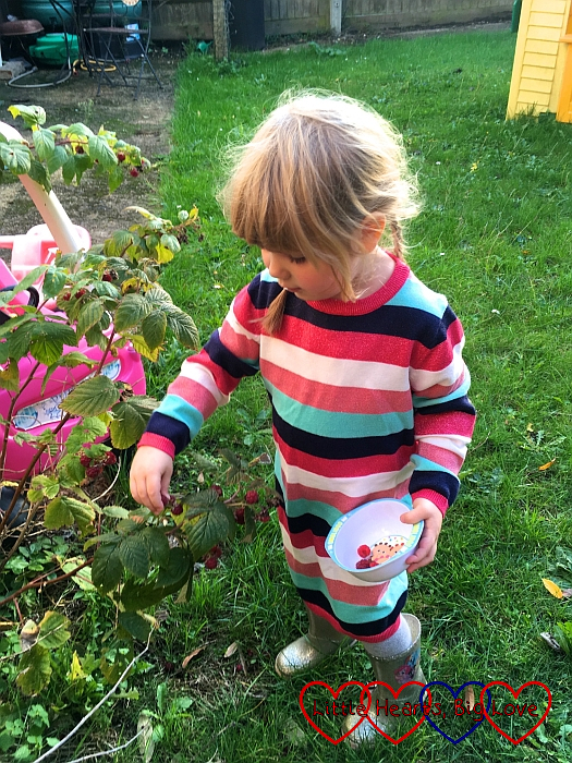 Sophie picking raspberries from our raspberry bush