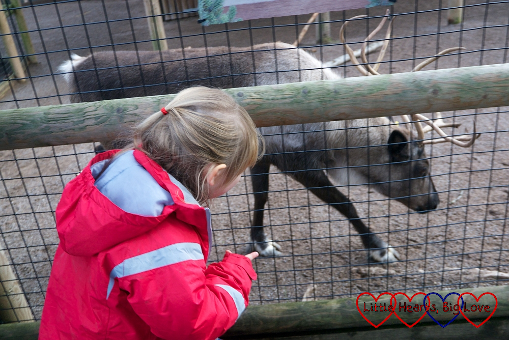 Sophie looking at a reindeer