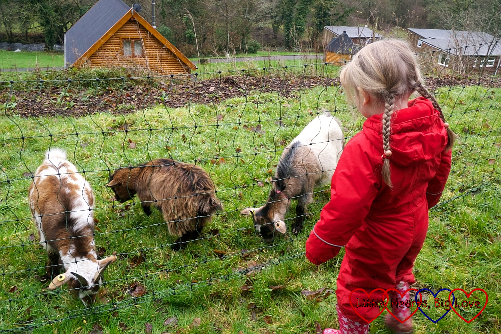 Sophie with the goats at Coombe Mill