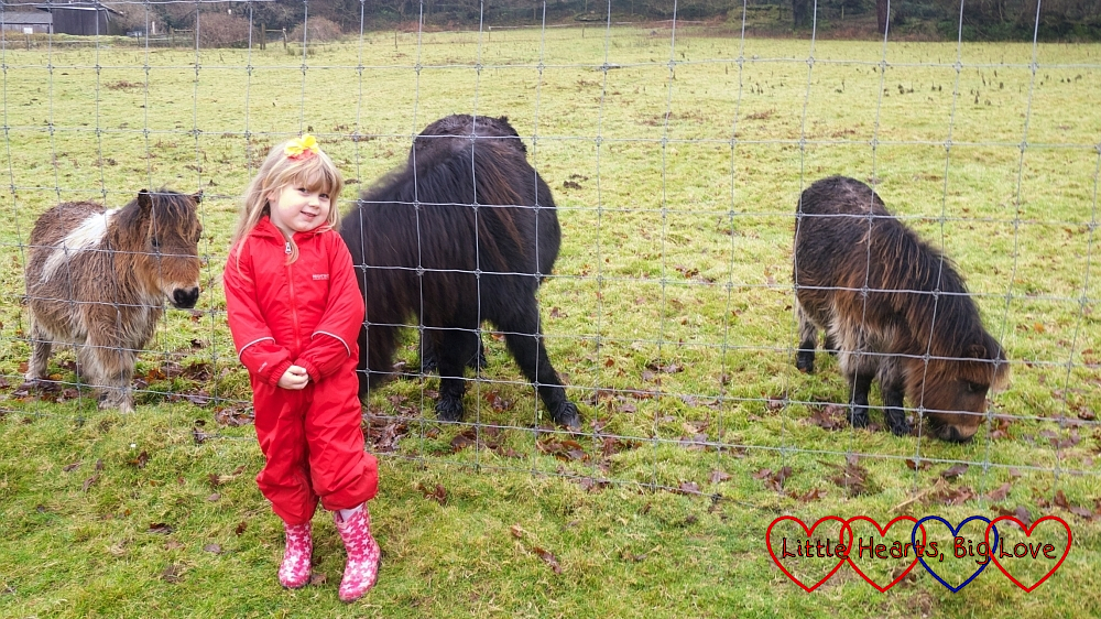 Sophie with the ponies at Coombe Mill