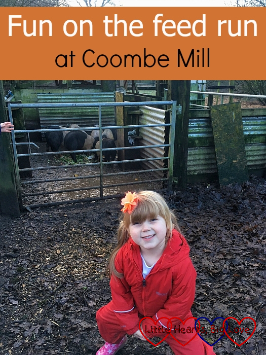 "Sophie in front of the pig pen - ""Fun on the feed run at Coombe Mill"""