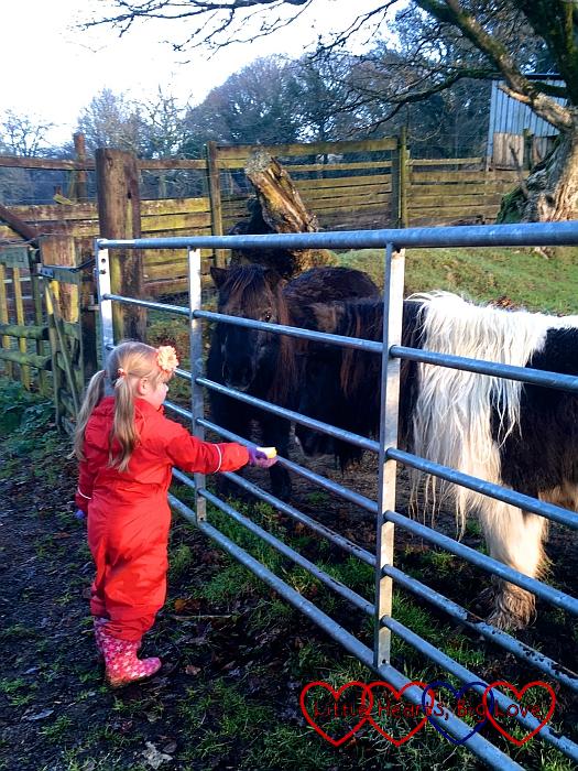 Sophie feeding a pony