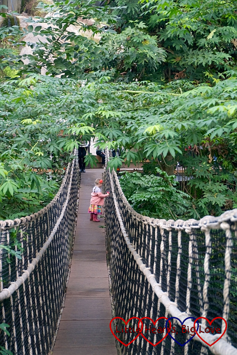 Sophie walking across the rope bridge in the rainforest canopy walkway
