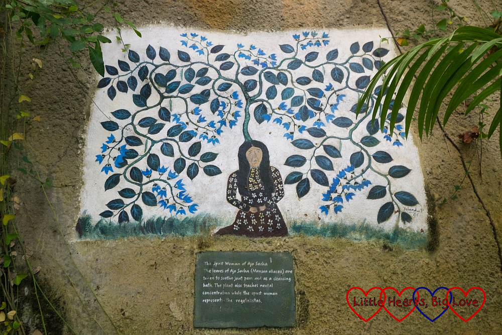 "Painting on the wall with the text - """"The Spirit Woman of Ajo Sacha. The leaves of Ajo Sacha are taken to soothe joint pain and as a cleansing bath. The plant also teaches mental concentration while the spirit woman represents the vegitalistas."""