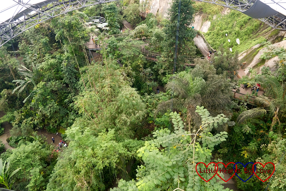 The view from the top of the rainforest biome