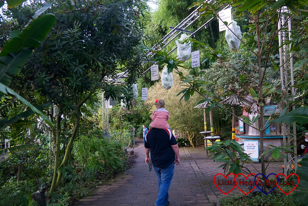 Sophie sitting on Daddy's shoulders as he walks through the rainforest biome