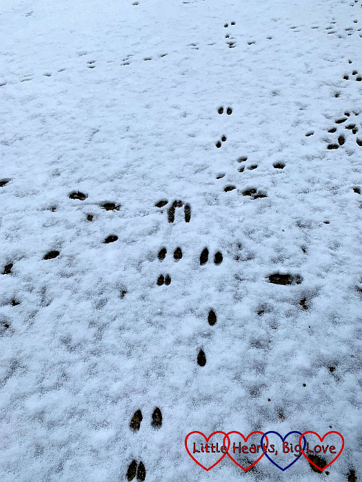Rabbit prints in the snow