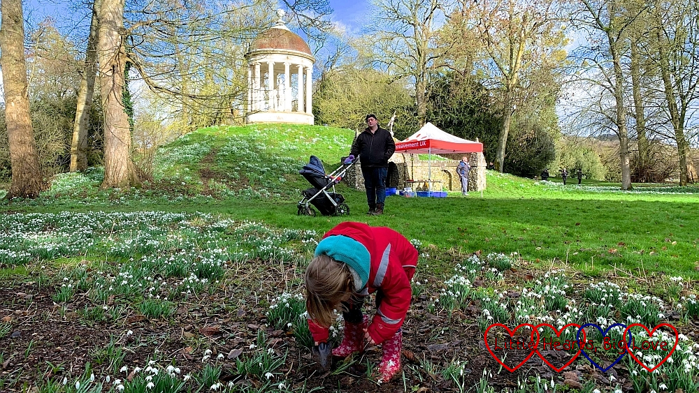 Sophie planting a snowdrop in memory of Jessica at West Wycombe Park