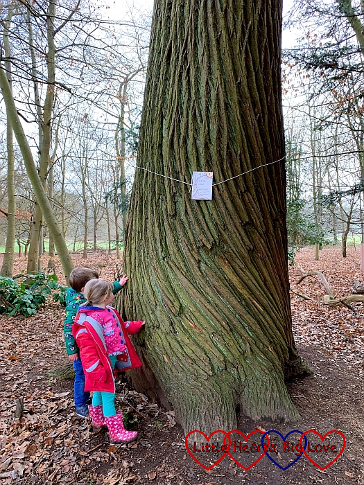 Sophie and F looking at a tree with a trunk like a unicorn horn
