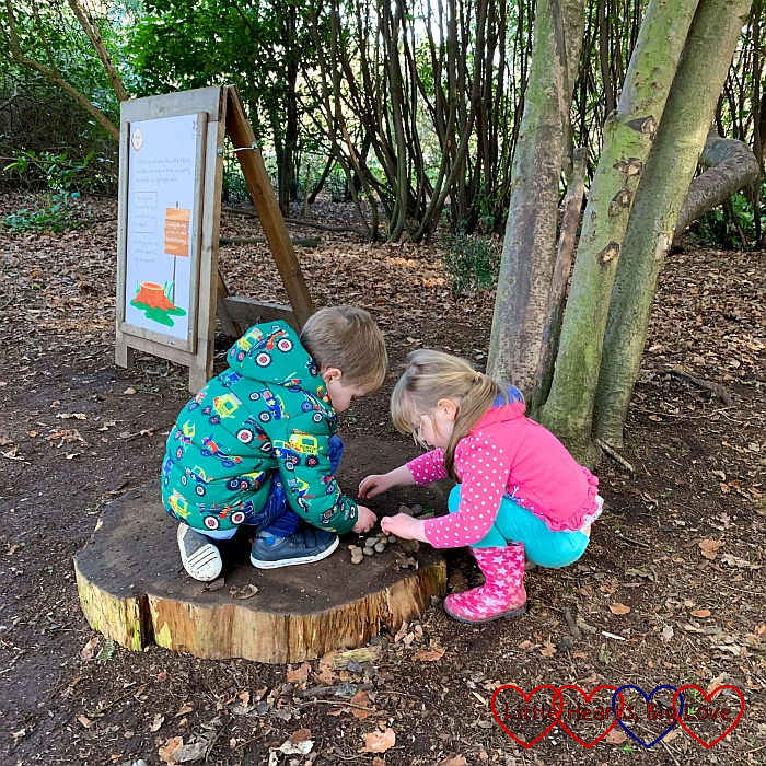 Sophie arranging stones on a tree stump with her friend F