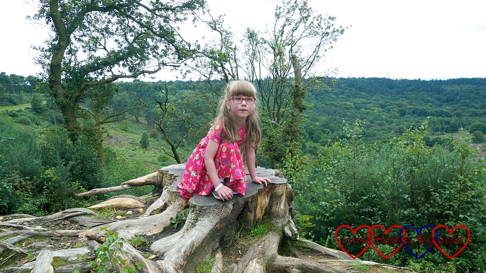 Jessica sitting on a tree stump