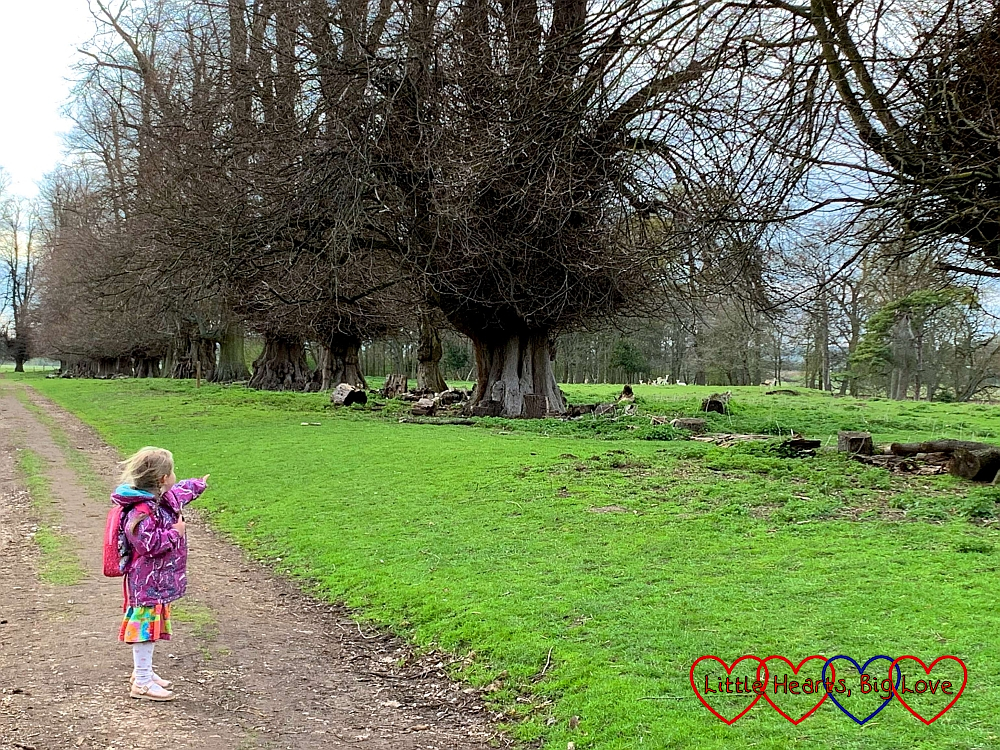 Sophie pointing to the deer in the deer enclosure at Charlecote Park