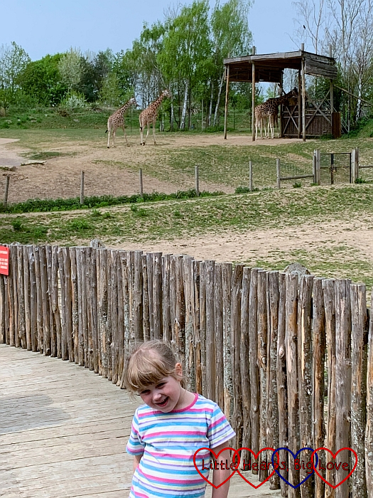 Sophie with four giraffes in the background