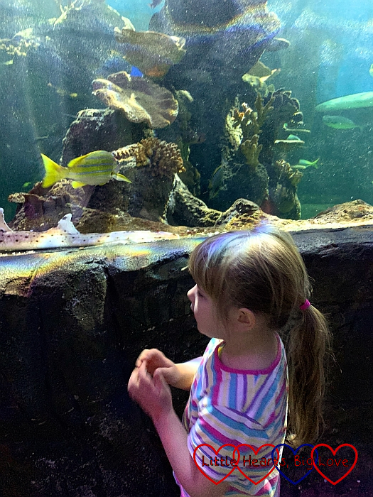 Sophie looking at the fish in the SEA LIFE Centre