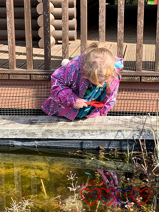 Sophie looking into one of the raised ponds at Iver Environment Centre with her magnifying glass