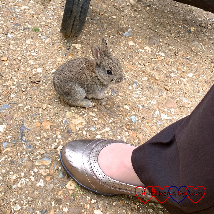 A little bunny next to my mum's foot