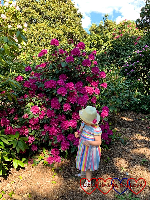 Sophie standing in front of a pink rhododendron bush