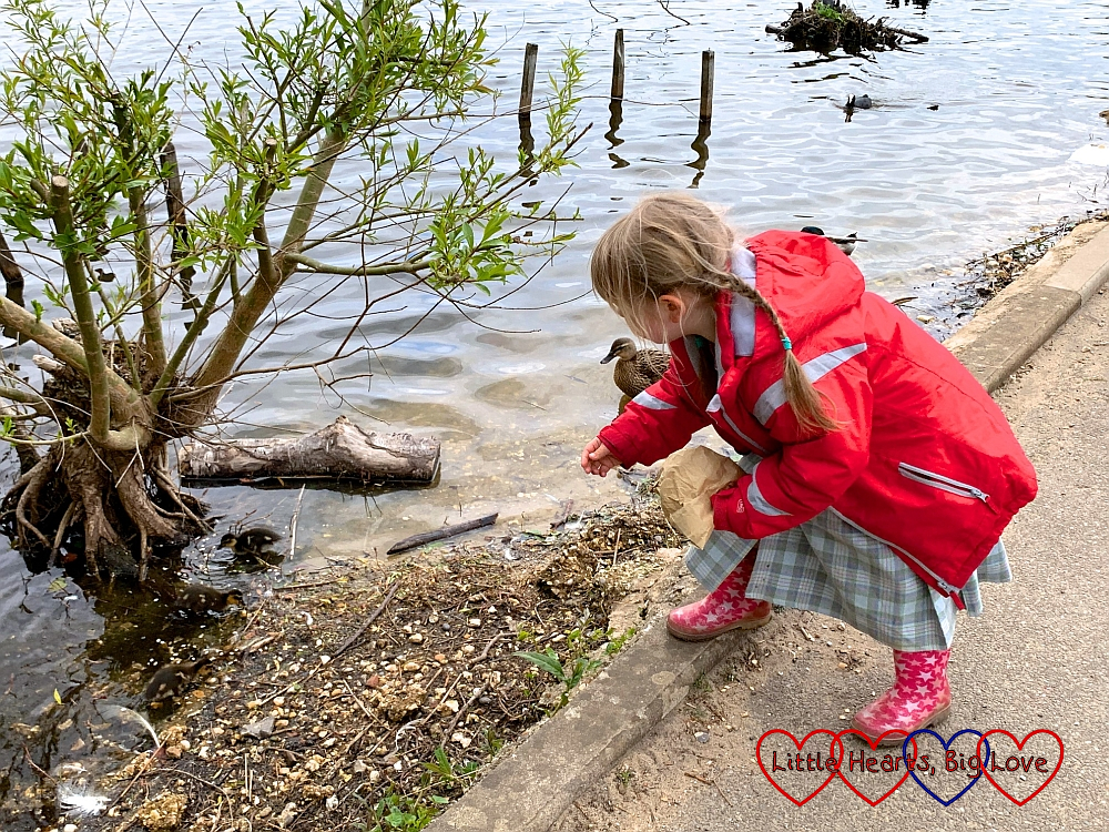 Sophie feeding the ducklings at Petersfield Heath lake