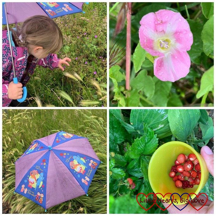 (top) Sophie looking at wildflowers; a pink field bindweed flower; (bottom) Sophie hiding under her umbrella in the long grass; a pot with wild strawberries and a couple of raspberries