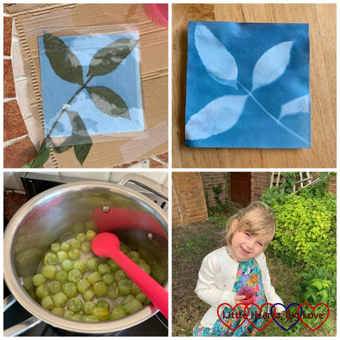 (top) a leaf on photo-sensitive paper; the print of the leaf on the paper; (bottom) gooseberries in a pan; Sophie picking raspberries
