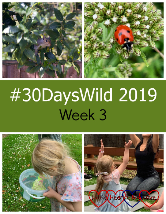 "(top - a squirrel looking out of a tree; a ladybird on a leaf; (bottom) - Sophie collecting elderflowers; Sophie doing yoga outdoors - ""#30DaysWild 2019 - Week 3"""