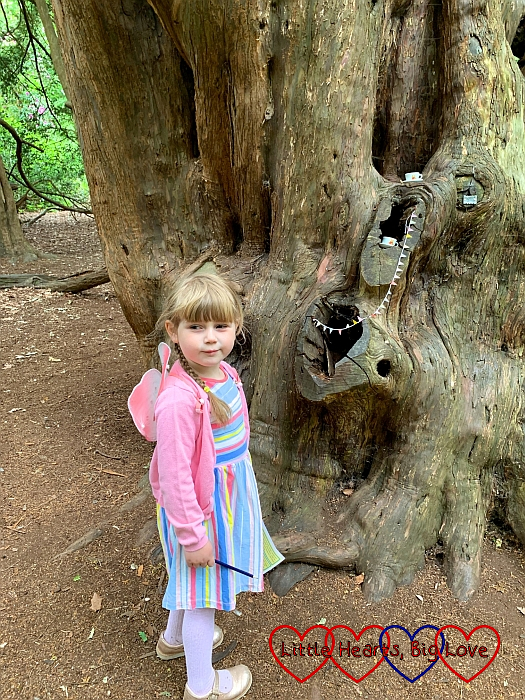 Sophie ooking at the fairy picnic in the yew tree