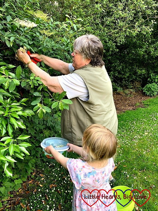 Sophie picking elderflowers with Grandma