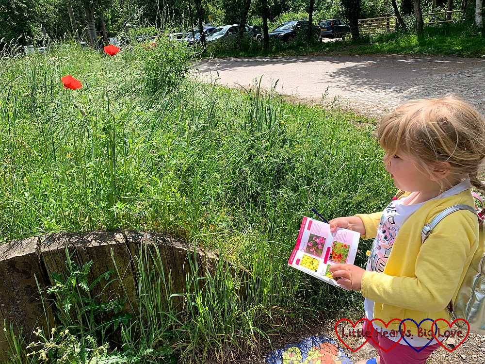 Sophie looking at poppies while holding her I-Spy nature book