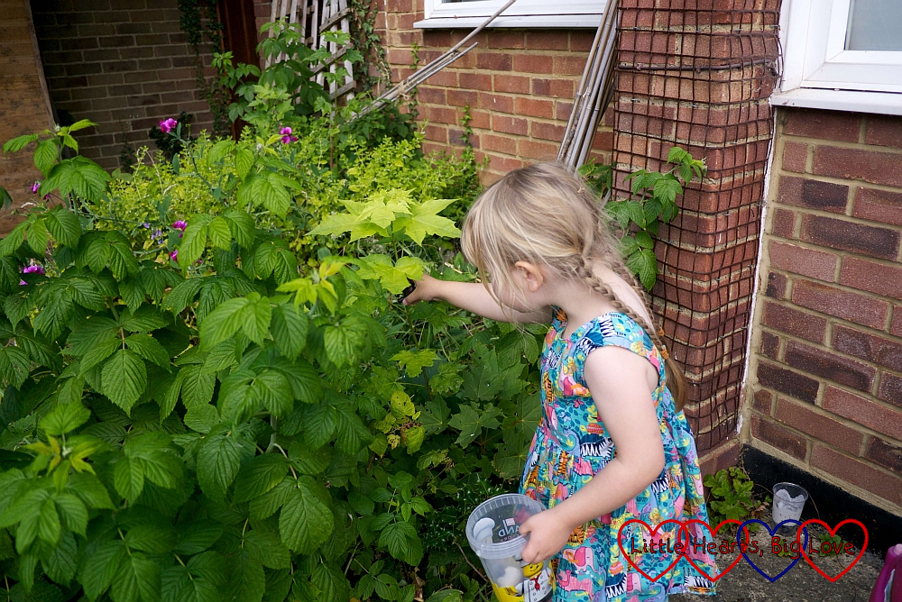 Sophie finding a toy monkey hidden in the raspberry bushes