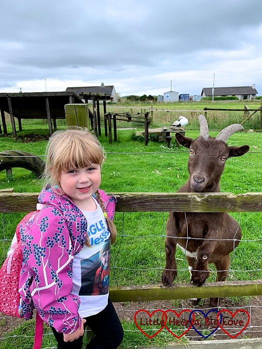 Sophie standing next to a brown goat at Puffin Croft
