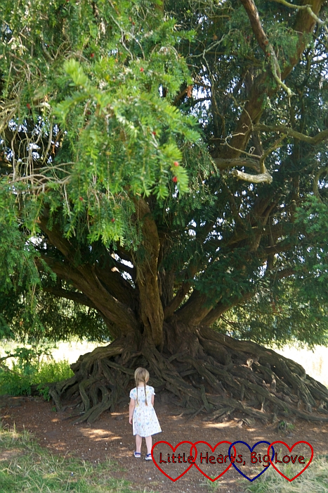 Sophie standing at the foot of a yew tree