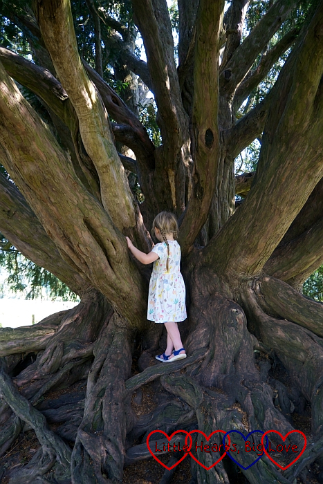 Sophie climbing a yew tree