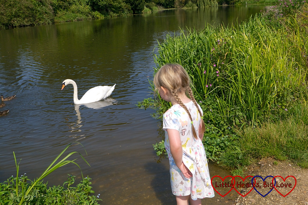 Sophie looking at a swan on a lake near Waverley Abbey