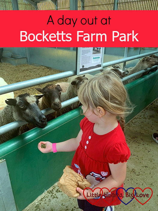 "Sophie feeding the sheep - ""A day out at Bocketts Farm Park"""