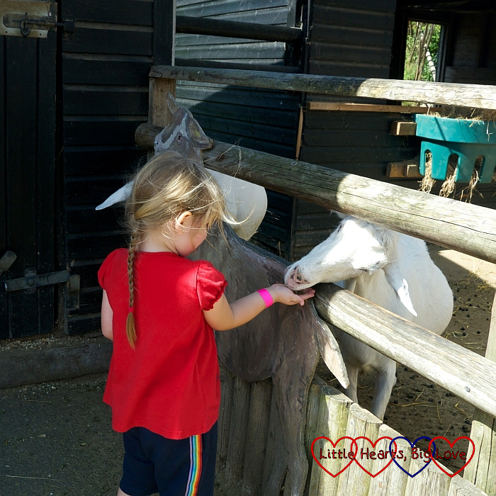 Sophie feeding the goats